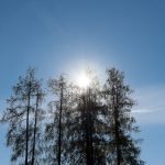 Gegenlicht Sonne Mieminger Plateau Mountains Tirol Herbst autumn - Michael Deutschmann, Akad. Mentalcoach - Photography - Mentalcoaching Hypnose Seminare - Mental Austria