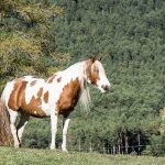 Pferd Horse Mieminger Plateau Mountains Tirol Herbst autumn - Michael Deutschmann, Akad. Mentalcoach - Photography - Mentalcoaching Hypnose Seminare - Mental Austria