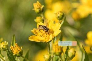 Biene Bee Blume flower Herbst autumn - Michael Deutschmann, Akad. Mentalcoach - Photography - Mentalcoaching Hypnose Seminare - Mental Austria