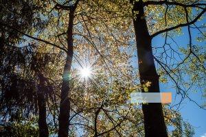 Herbstsonne bunte Blätter goldener Herbst Ötztal - Michael Deutschmann, Akad. Mentalcoach - Photography - Mentalcoaching Hypnose Seminare - Mental Austria
